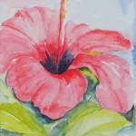 Hibiscus_I